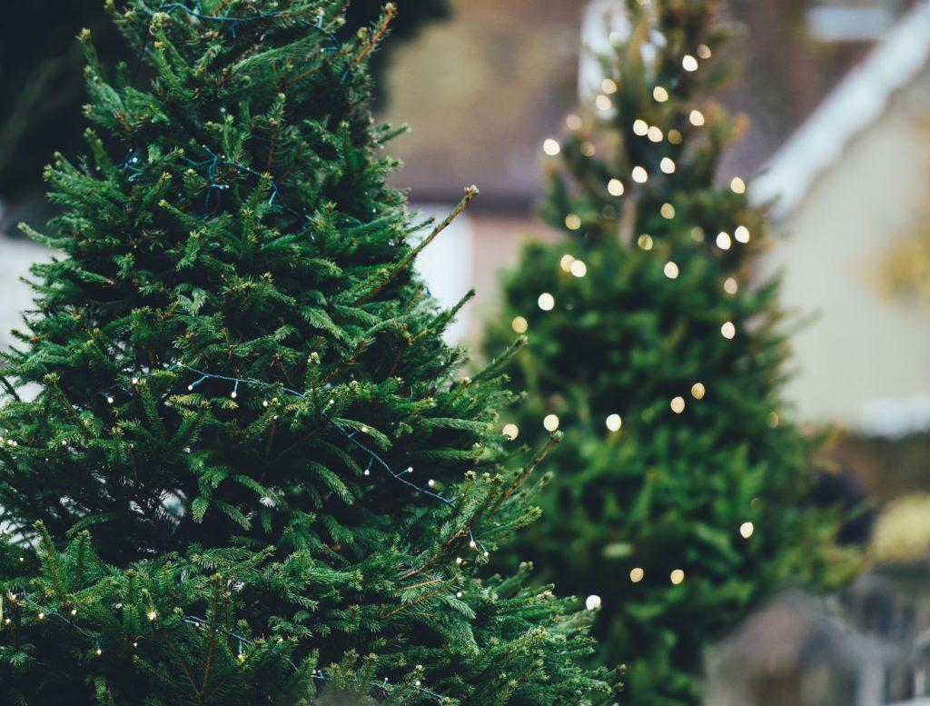 Kam s vánočním stromkem?