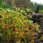 Mech může přispět k dekontaminaci vody a půdy