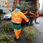 Kam s vysloužilým vánočním stromkem?