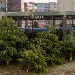 Vánoční stromek nepatří do popelnice