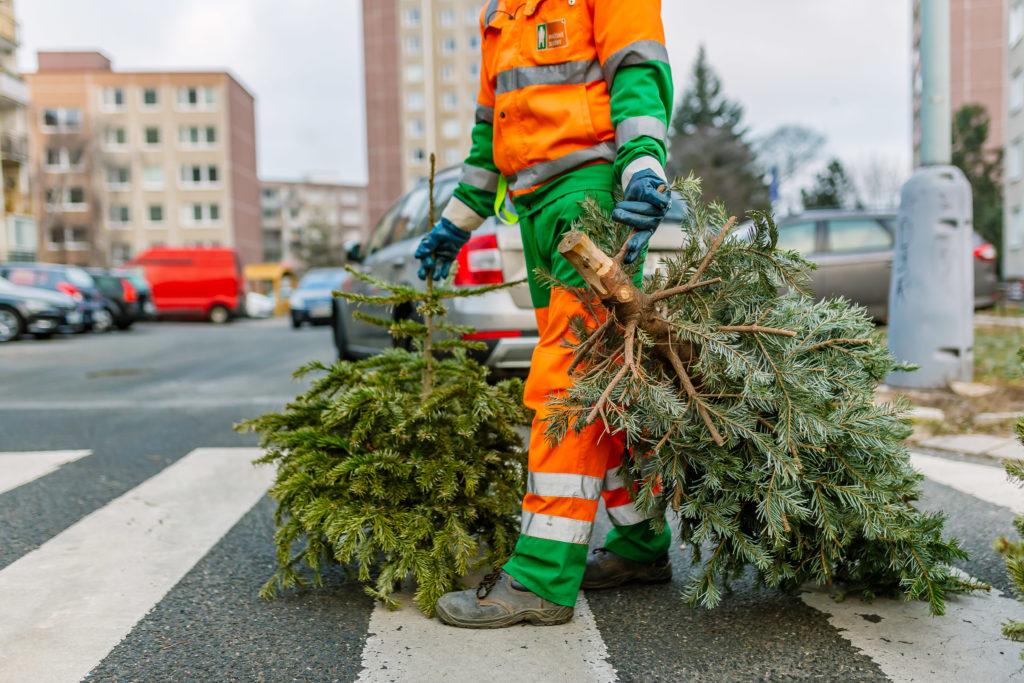 Vánoční stromky dosloužily. Kam snimi?