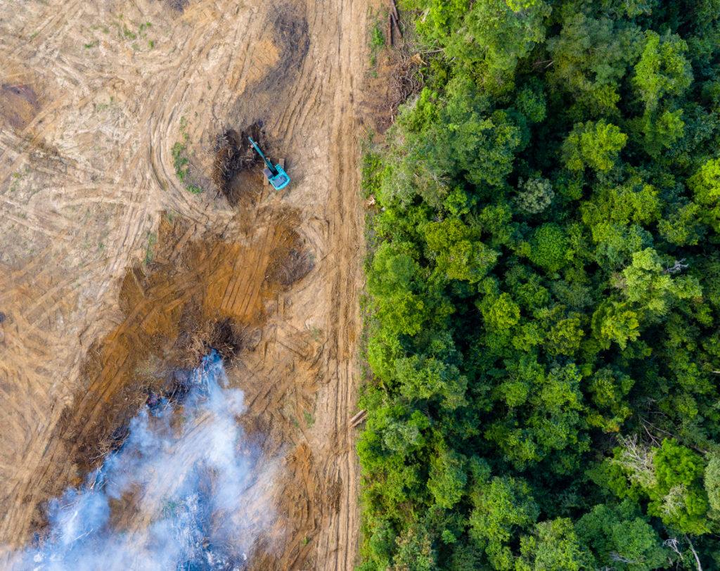 Škodí palmový olej jen přírodě, nebo i člověku? A co o něm vlastně víme?