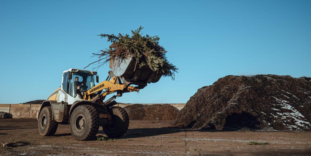 Jak mohou vánoční stromky sloužit i po Vánocích?