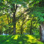 Jaké to asi je, mít svůj vlastní strom?